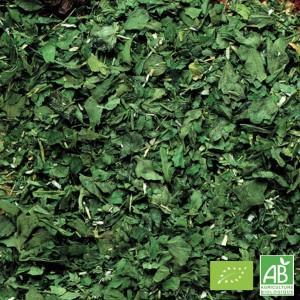 BIO parsley